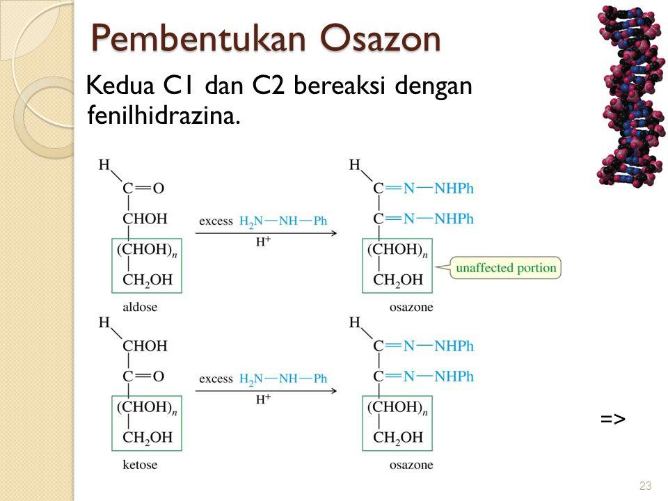 Pembentukan Osazon Pembentukan Osazon Kedua C1 dan C2 bereaksi dengan fenilhidrazina. 23 =>