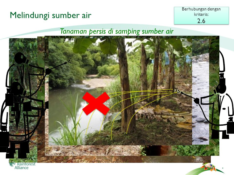4 Melindungi sumber air Berhubungan dengan kriteria: 2.6 Berhubungan dengan kriteria: 2.6 Tanaman persis di samping sumber air 4
