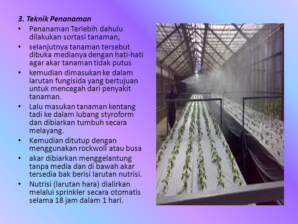 3. Teknik Penanaman • Penanaman Terlebih dahulu dilakukan sortasi tanaman, • selanjutnya tanaman tersebut dibuka medianya dengan hati-hati agar akar t
