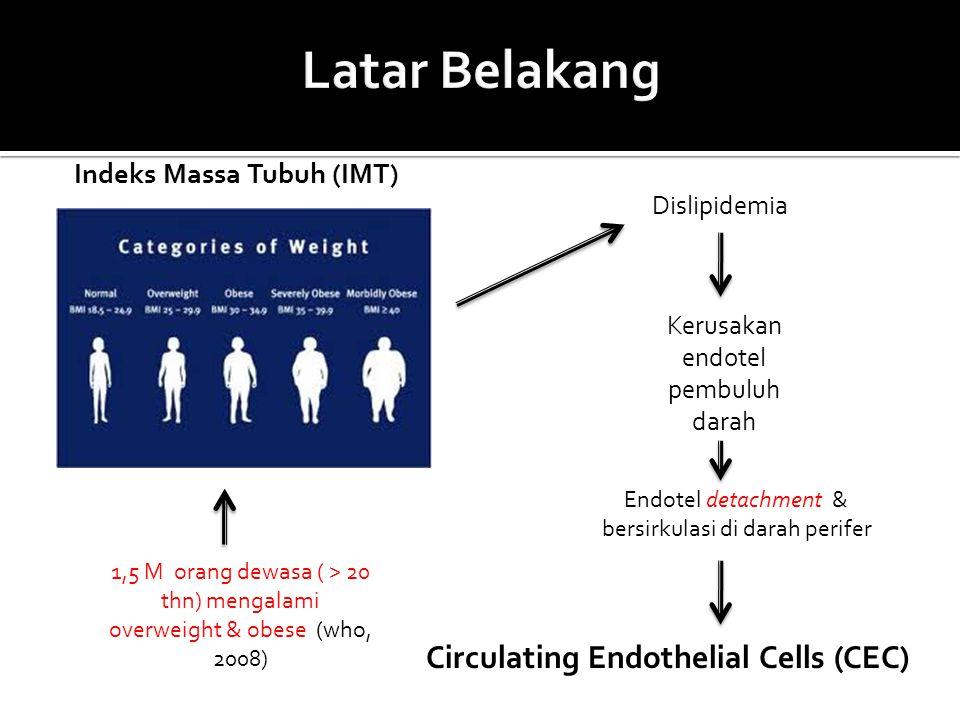 Indeks Massa Tubuh (IMT) Dislipidemia Kerusakan endotel pembuluh darah Endotel detachment & bersirkulasi di darah perifer 1,5 M orang dewasa ( > 20 th