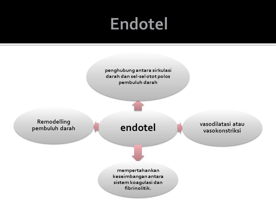 endotel penghubung antara sirkulasi darah dan sel-sel otot polos pembuluh darah vasodilatasi atau vasokonstriksi mempertahankan keseimbangan antara si