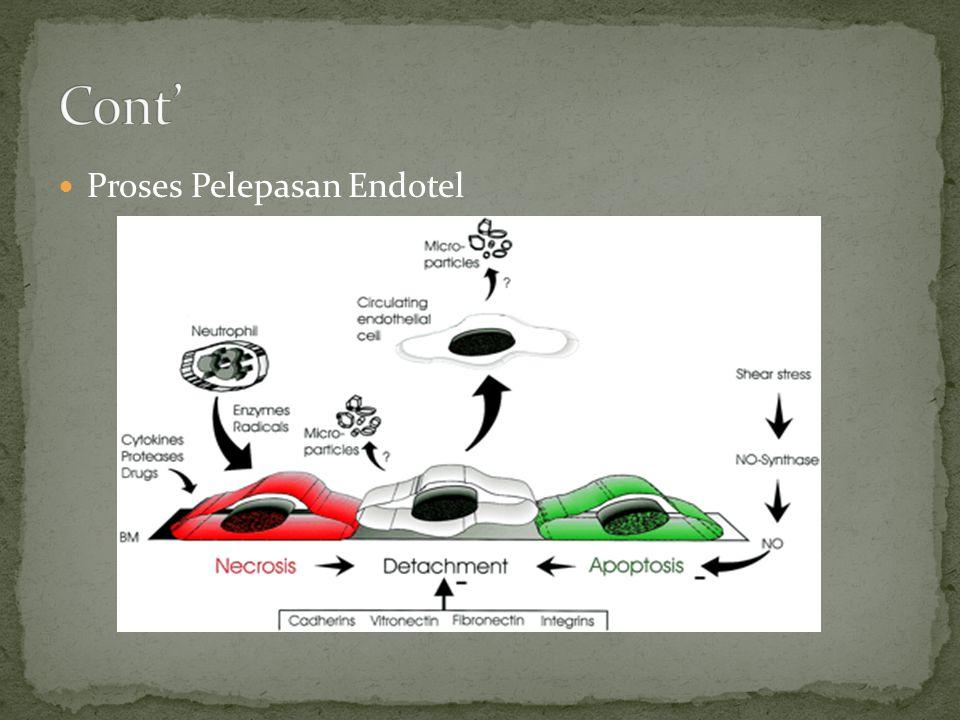  Proses Pelepasan Endotel