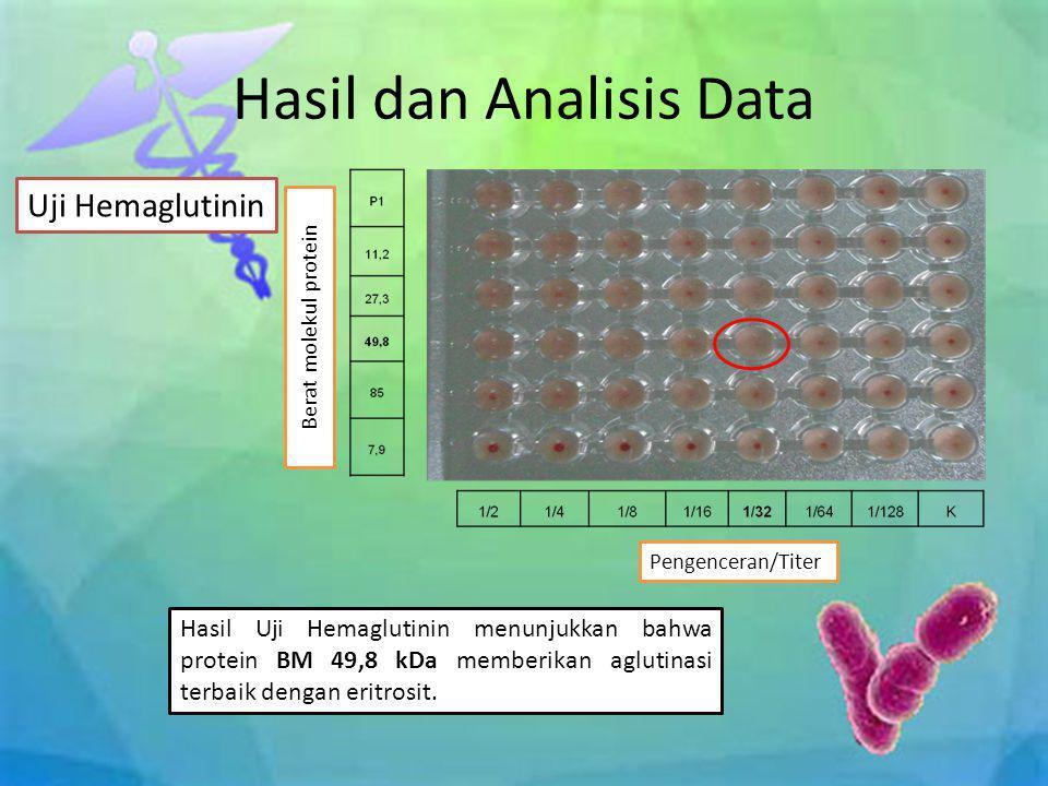 Hasil dan Analisis Data Uji Hemaglutinin Hasil Uji Hemaglutinin menunjukkan bahwa protein BM 49,8 kDa memberikan aglutinasi terbaik dengan eritrosit.