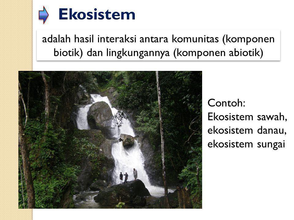 adalah hasil interaksi antara komunitas (komponen biotik) dan lingkungannya (komponen abiotik) Contoh: Ekosistem sawah, ekosistem danau, ekosistem sun
