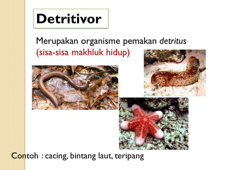 Detritivor Merupakan organisme pemakan detritus (sisa-sisa makhluk hidup) Contoh : cacing, bintang laut, teripang