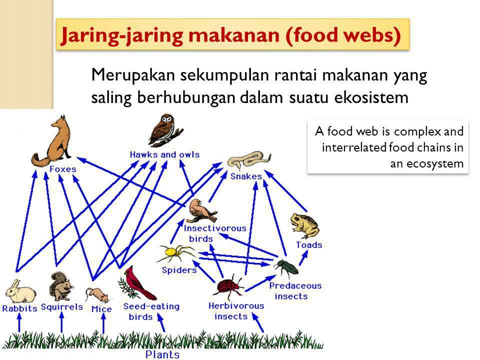 Merupakan sekumpulan rantai makanan yang saling berhubungan dalam suatu ekosistem Jaring-jaring makanan (food webs) A food web is complex and interrel