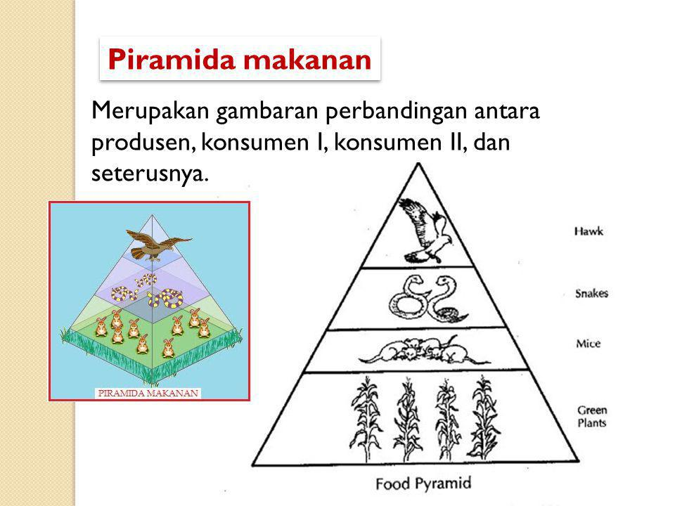 Piramida makanan Merupakan gambaran perbandingan antara produsen, konsumen I, konsumen II, dan seterusnya.