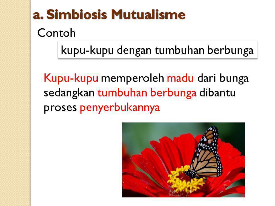 Contoh kupu-kupu dengan tumbuhan berbunga Kupu-kupu memperoleh madu dari bunga sedangkan tumbuhan berbunga dibantu proses penyerbukannya