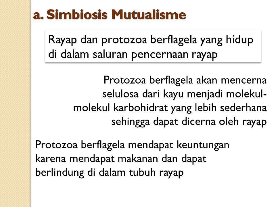 Rayap dan protozoa berflagela yang hidup di dalam saluran pencernaan rayap Protozoa berflagela akan mencerna selulosa dari kayu menjadi molekul- molek