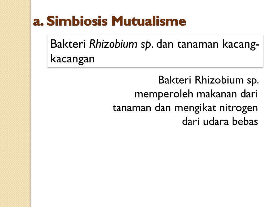 Bakteri Rhizobium sp. dan tanaman kacang- kacangan Bakteri Rhizobium sp. memperoleh makanan dari tanaman dan mengikat nitrogen dari udara bebas