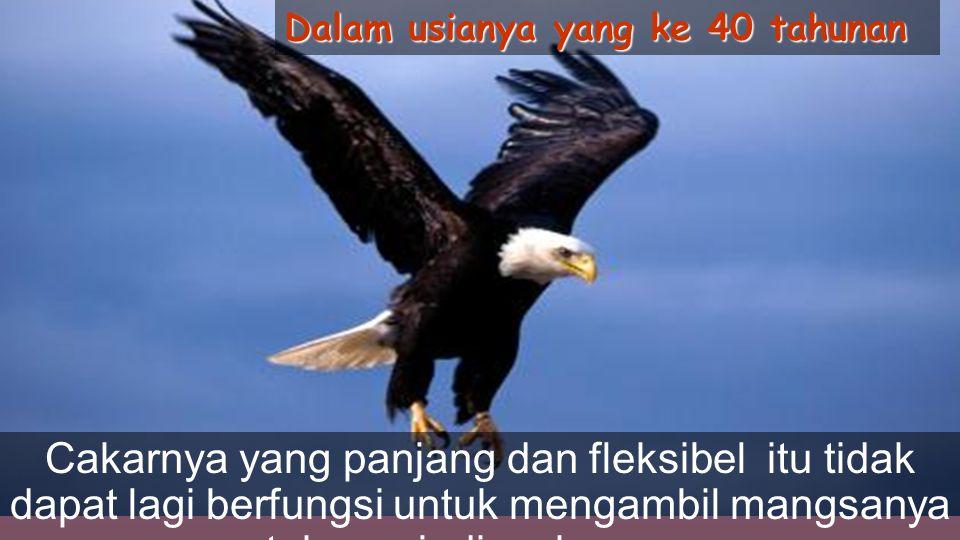 Tapi untuk mencapai usia ini, elang harus membuat keputusan yang sangat sulit Dia dapat hidup sampai 70 tahun lamanya