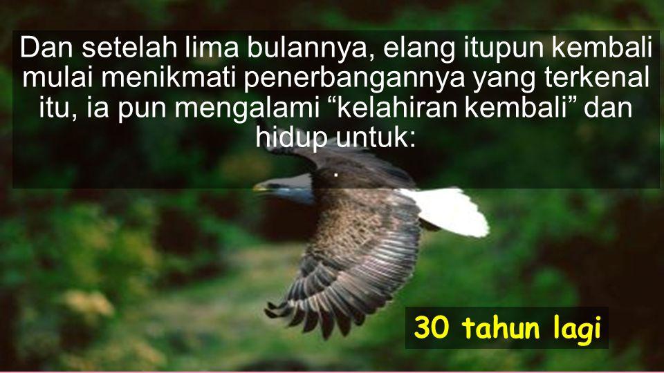 Bilamana cakar barunya itu tumbuh kembali, maka elang itupun mulai mencabuti bulu-bulunya yang sudah tua itu.