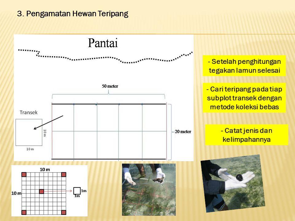 3. Pengamatan Hewan Teripang - Setelah penghitungan tegakan lamun selesai - Cari teripang pada tiap subplot transek dengan metode koleksi bebas - Cata