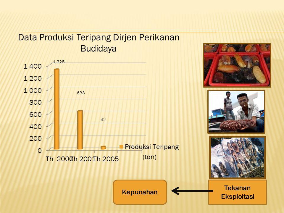 Data Produksi Teripang Dirjen Perikanan Budidaya 1.325 633 42 (ton) Tekanan Eksploitasi Kepunahan