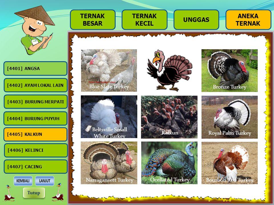 BESAR TERNAK KECIL UNGGAS Burung Puyuh adalah unggas daratan yang kecil namun gemuk, tidak berekor dan tidak dapat terbang tinggi. Pemakan biji-bijian