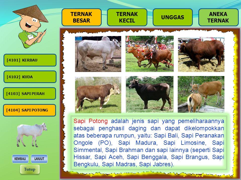 BESAR TERNAK KECIL UNGGAS [4101] KERBAU [4102] KUDA [4104] SAPI POTONG [4103] SAPI PERAH Sapi Perah adalah jenis sapi yang pemeliharaannya sebagai pen