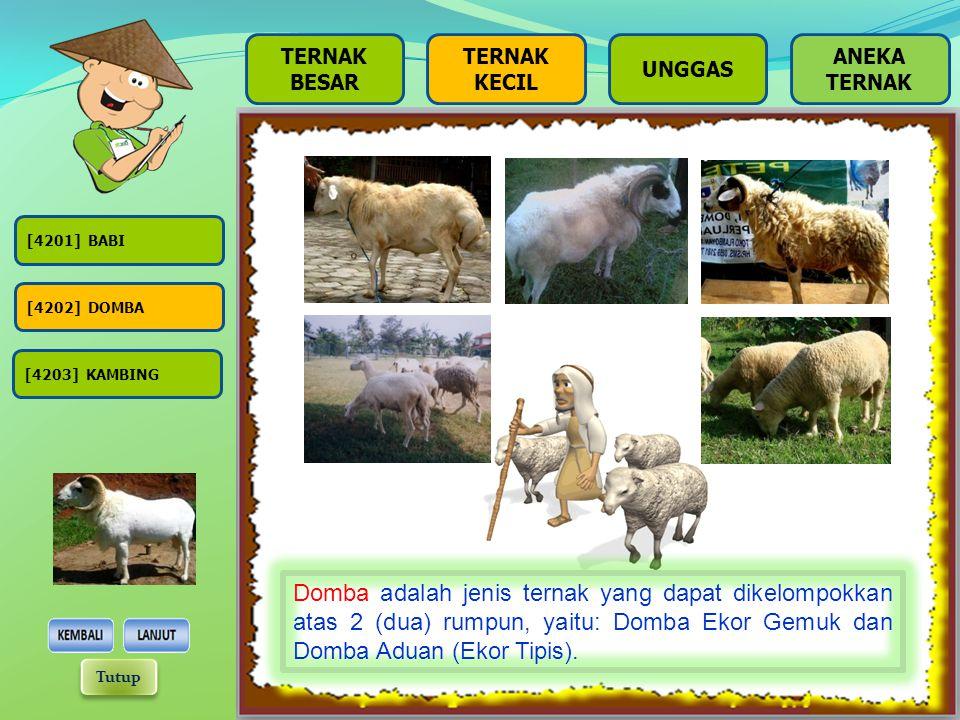 [4201] BABI [4202] DOMBA [4203] KAMBING TERNAK BESAR TERNAK KECIL UNGGAS Babi adalah jenis ternak yang dapat dikelompokkan atas 3 (tiga) rumpun, yaitu