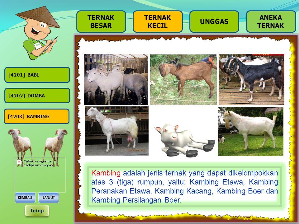 BESAR TERNAK KECIL UNGGAS [4201] BABI [4202] DOMBA [4203] KAMBING Domba adalah jenis ternak yang dapat dikelompokkan atas 2 (dua) rumpun, yaitu: Domba
