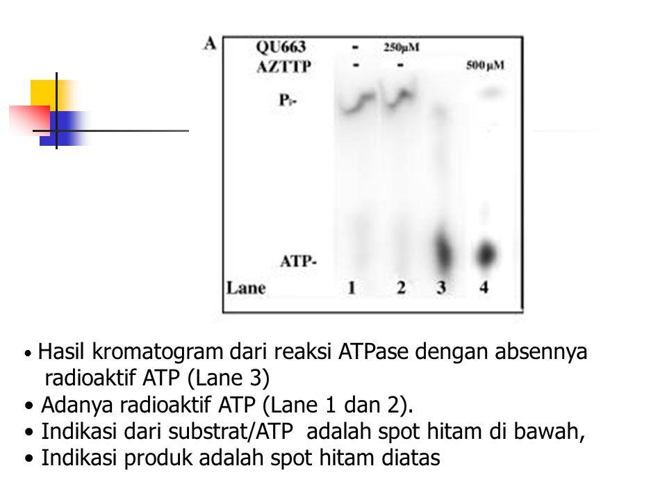 • Hasil kromatogram dari reaksi ATPase dengan absennya radioaktif ATP (Lane 3) • Adanya radioaktif ATP (Lane 1 dan 2). • Indikasi dari substrat/ATP ad
