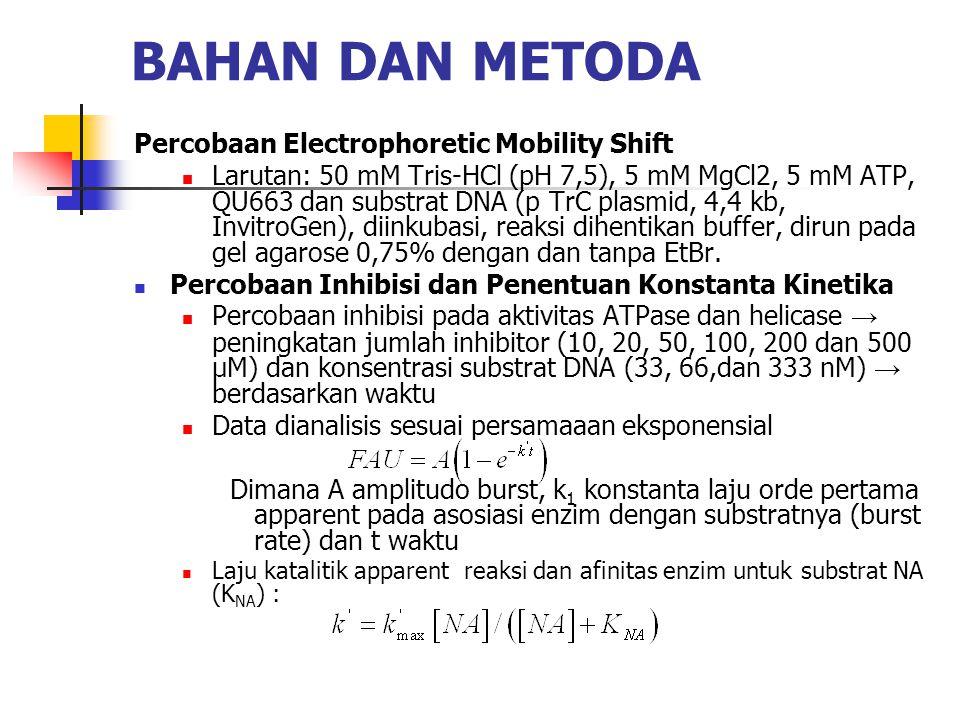 BAHAN DAN METODA Percobaan Electrophoretic Mobility Shift  Larutan: 50 mM Tris-HCl (pH 7,5), 5 mM MgCl2, 5 mM ATP, QU663 dan substrat DNA (p TrC plasmid, 4,4 kb, InvitroGen), diinkubasi, reaksi dihentikan buffer, dirun pada gel agarose 0,75% dengan dan tanpa EtBr.