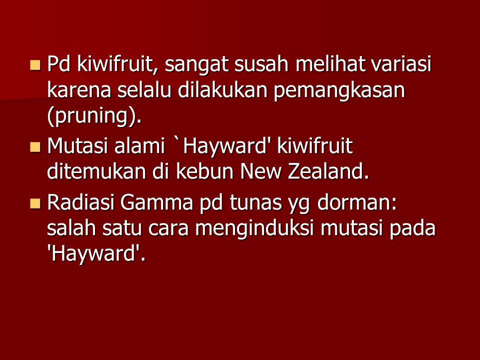  Pd kiwifruit, sangat susah melihat variasi karena selalu dilakukan pemangkasan (pruning).  Mutasi alami `Hayward' kiwifruit ditemukan di kebun New