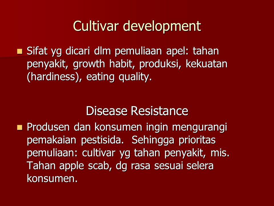 Cultivar development  Sifat yg dicari dlm pemuliaan apel: tahan penyakit, growth habit, produksi, kekuatan (hardiness), eating quality. Disease Resis