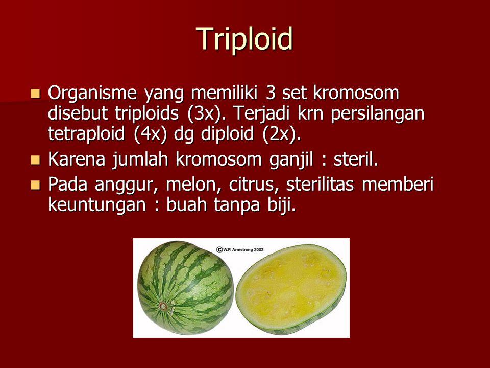 Triploid  Organisme yang memiliki 3 set kromosom disebut triploids (3x). Terjadi krn persilangan tetraploid (4x) dg diploid (2x).  Karena jumlah kro