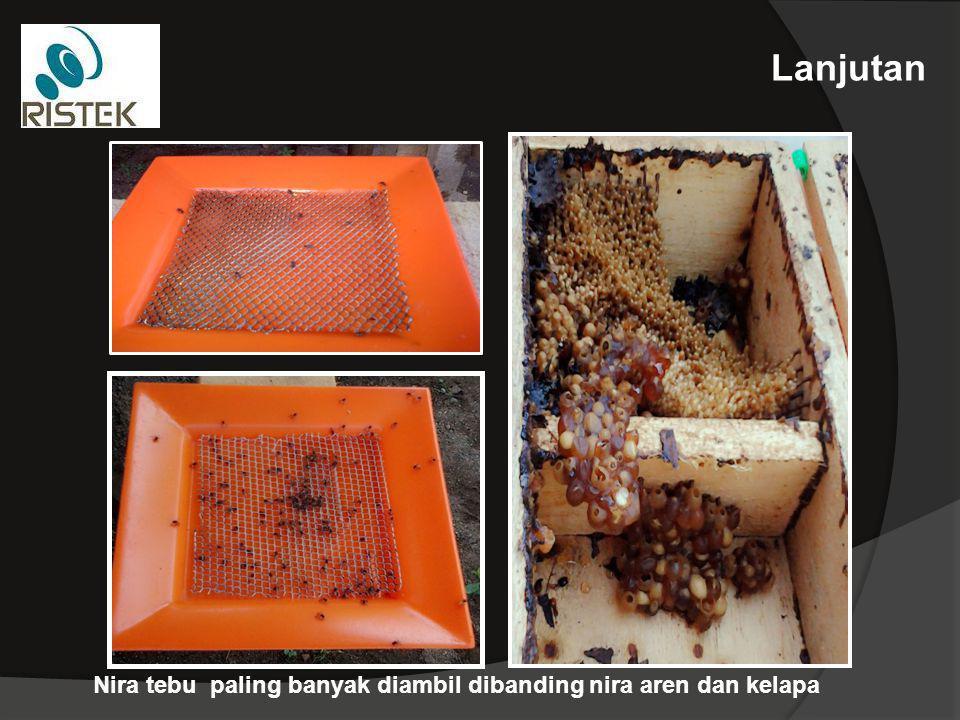KESIMPULAN : 1.Pemberian pakan lebah tanpa bunga mempunyai prospek untuk dikembangkan sebagai pakan lebah 2.Pemberian nira tanaman dapat meningkatkan produksi madu Apis trigona 3.Produksi madu tertinggi sebesar 1149 ml/koloni yang didapat dari pemberian nira tebu SARAN : 1.