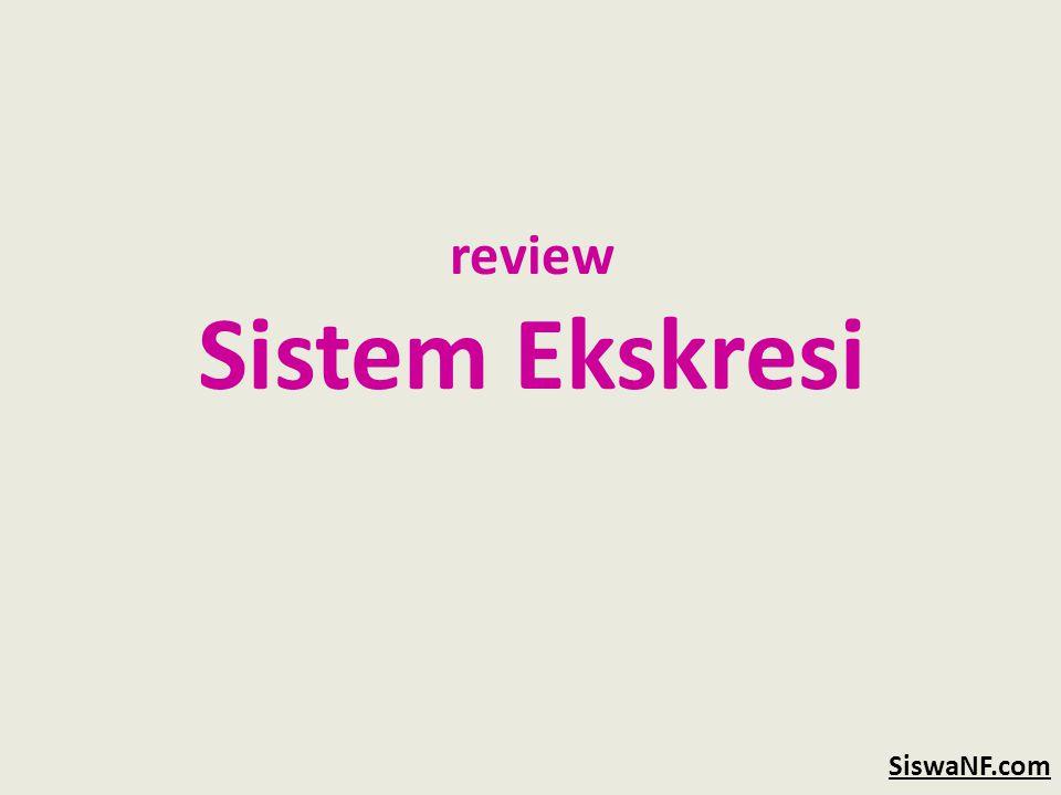 review Sistem Ekskresi SiswaNF.com