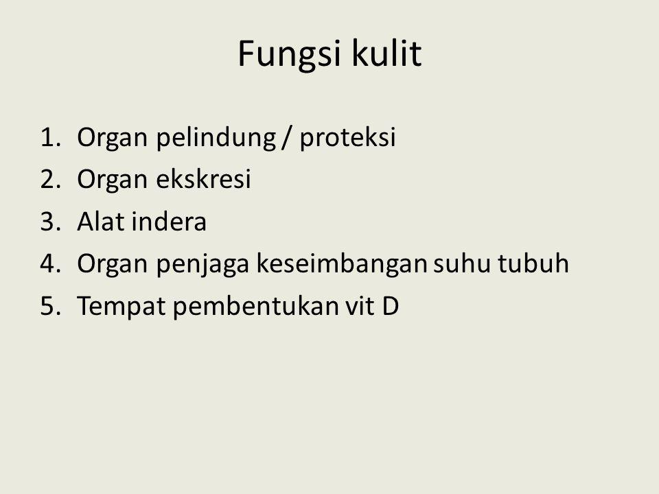 Fungsi kulit 1.Organ pelindung / proteksi 2.Organ ekskresi 3.Alat indera 4.Organ penjaga keseimbangan suhu tubuh 5.Tempat pembentukan vit D