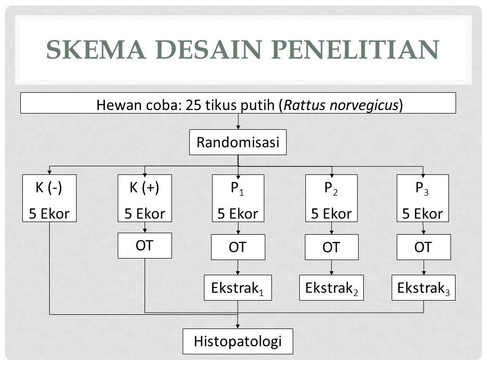 SKEMA DESAIN PENELITIAN Hewan coba: 25 tikus putih (Rattus norvegicus) Randomisasi K (-) 5 Ekor P 1 5 Ekor K (+) 5 Ekor P 2 5 Ekor P 3 5 Ekor OT Ekstrak 1 Ekstrak 2 Ekstrak 3 Histopatologi OT