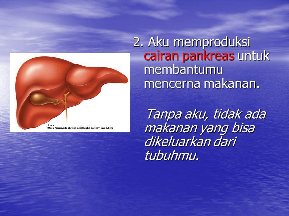2. Aku memproduksi cairan pankreas untuk membantumu mencerna makanan.