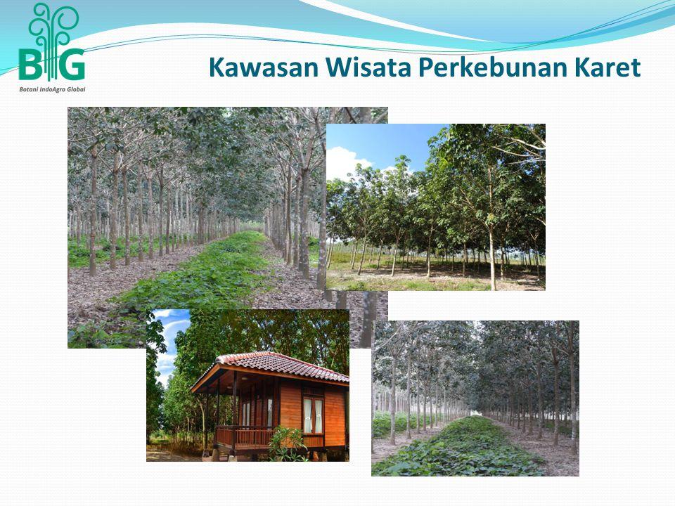 Kawasan Wisata Perkebunan Karet