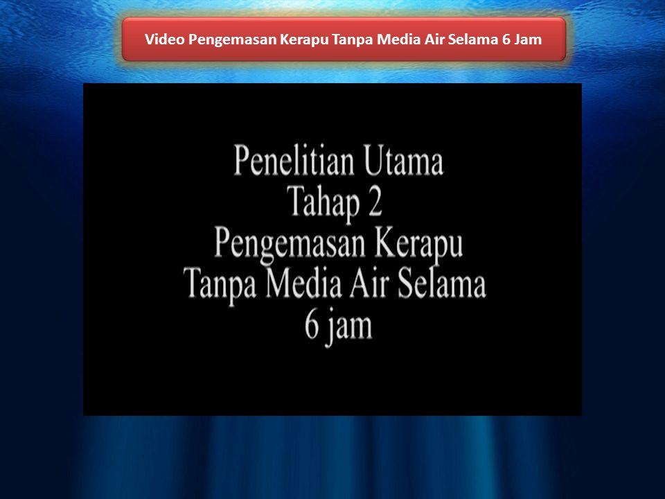 Video Pengemasan Kerapu Tanpa Media Air Selama 6 Jam