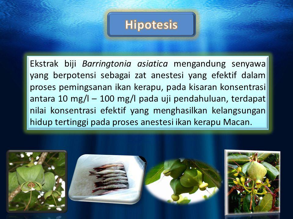 Ekstrak biji B.asiatica konsentrasi 12 mg/l, 14 mg/l, 17 mg/l, 21 mg/l, dan 25 mg/l dapat memingsankan 100% populasi ikan kerapu masing-masing dalam rata-rata waktu 55 menit, 18 menit, 14 menit, 8 menit dan 7 menit.