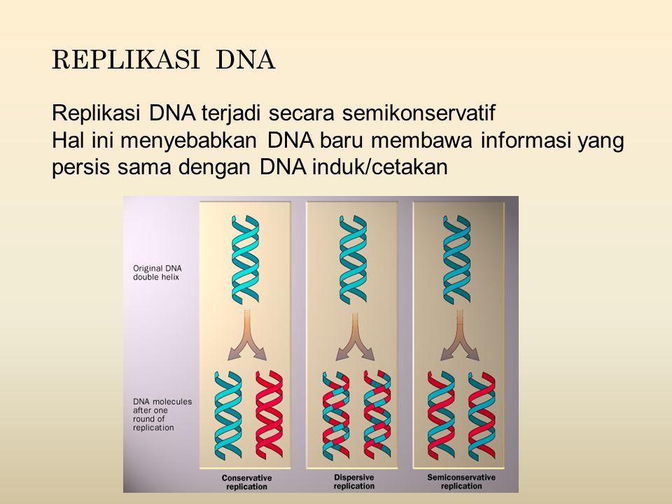 REPLIKASI DNA Replikasi DNA terjadi secara semikonservatif Hal ini menyebabkan DNA baru membawa informasi yang persis sama dengan DNA induk/cetakan
