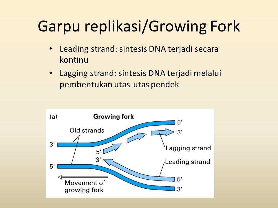 Garpu replikasi/Growing Fork • Leading strand: sintesis DNA terjadi secara kontinu • Lagging strand: sintesis DNA terjadi melalui pembentukan utas-uta