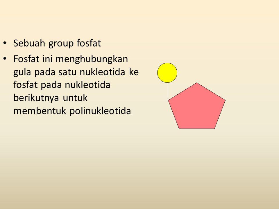 • Sebuah group fosfat • Fosfat ini menghubungkan gula pada satu nukleotida ke fosfat pada nukleotida berikutnya untuk membentuk polinukleotida