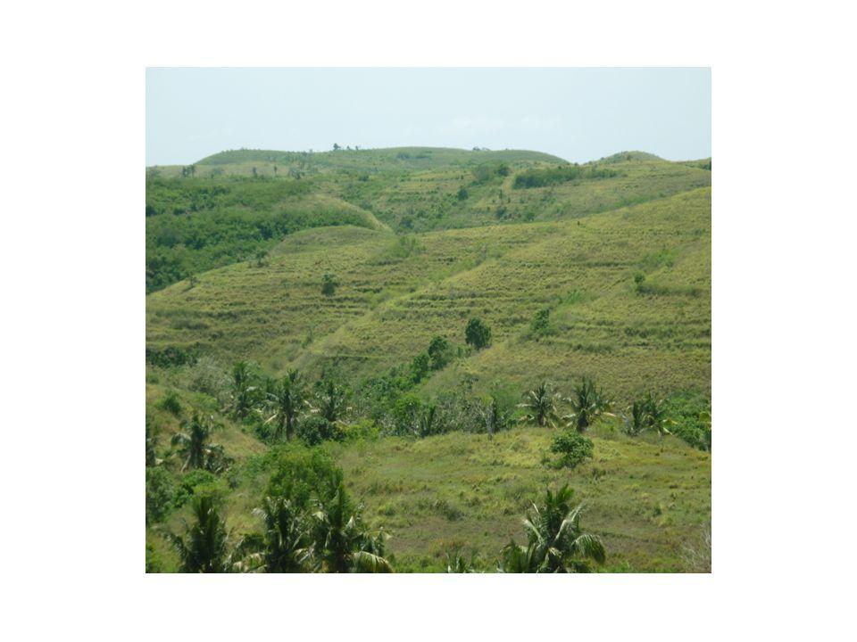 Kondisi Tanah • Tinggi : Ca • Rendah : C-org, N-tot, C/N, P, K, Mg, Na, H-dd • Tekstur : Liat berdebu ( liat = 46-49 %)