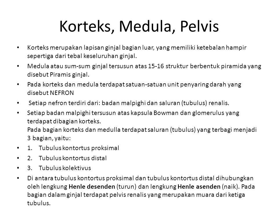 Korteks, Medula, Pelvis • Korteks merupakan lapisan ginjal bagian luar, yang memiliki ketebalan hampir sepertiga dari tebal keseluruhan ginjal. • Medu