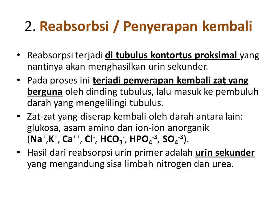 2. Reabsorbsi / Penyerapan kembali • Reabsorpsi terjadi di tubulus kontortus proksimal yang nantinya akan menghasilkan urin sekunder. • Pada proses in