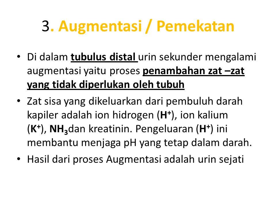 3. Augmentasi / Pemekatan • Di dalam tubulus distal urin sekunder mengalami augmentasi yaitu proses penambahan zat –zat yang tidak diperlukan oleh tub