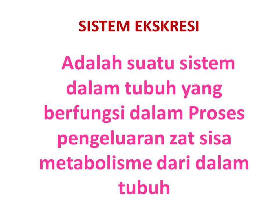 SISTEM EKSKRESI Adalah suatu sistem dalam tubuh yang berfungsi dalam Proses pengeluaran zat sisa metabolisme dari dalam tubuh