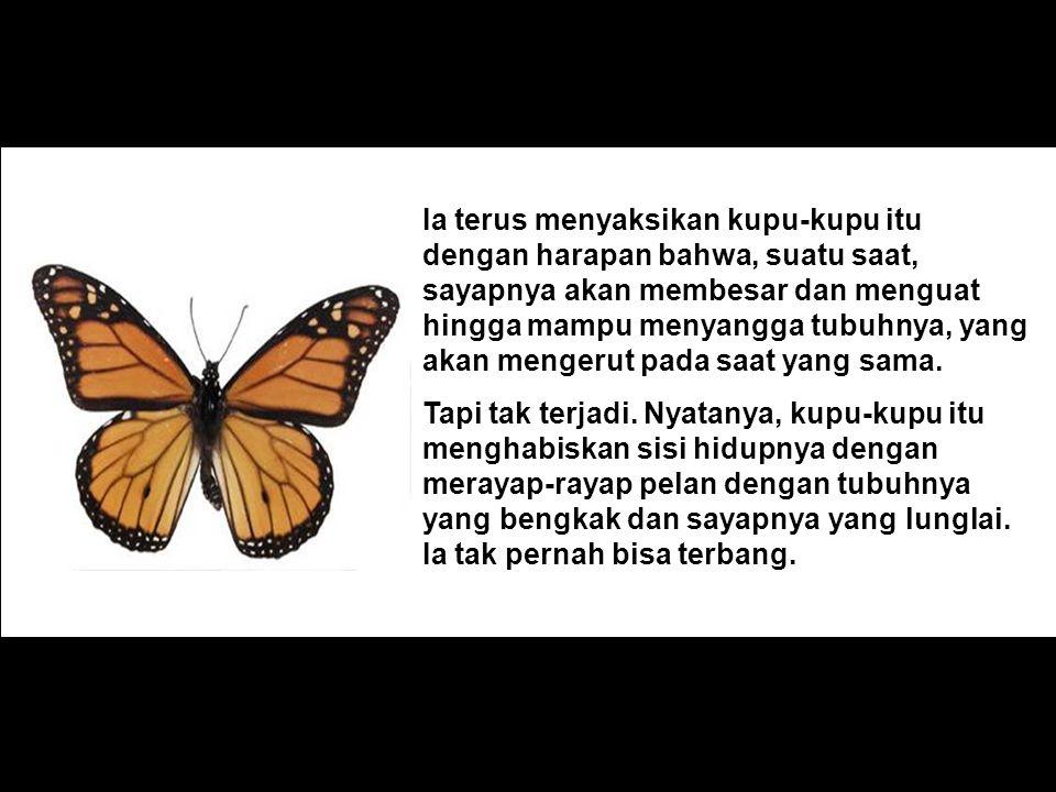 Ia terus menyaksikan kupu-kupu itu dengan harapan bahwa, suatu saat, sayapnya akan membesar dan menguat hingga mampu menyangga tubuhnya, yang akan men