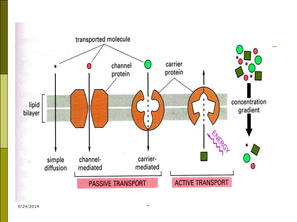 6/24/2014* Pada pinositosis :  materi yang masuk berupa larutan  vakuola endositik berukuran kecil ( < 150 nm )  Vakuola yang terbentuk dinamakan pinosom.
