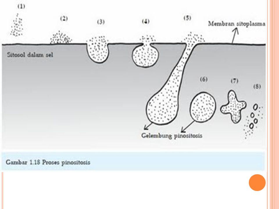 K ETERANGAN GAMBAR : 1.Molekul-molekul medium kultur mendekati membran sitoplasma.