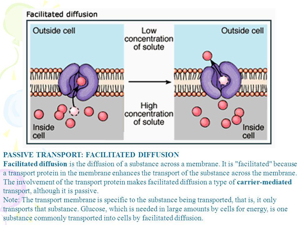 PASSIVE TRANSPORT: FACILITATED DIFFUSION Facilitated diffusion is the diffusion of a substance across a membrane. It is