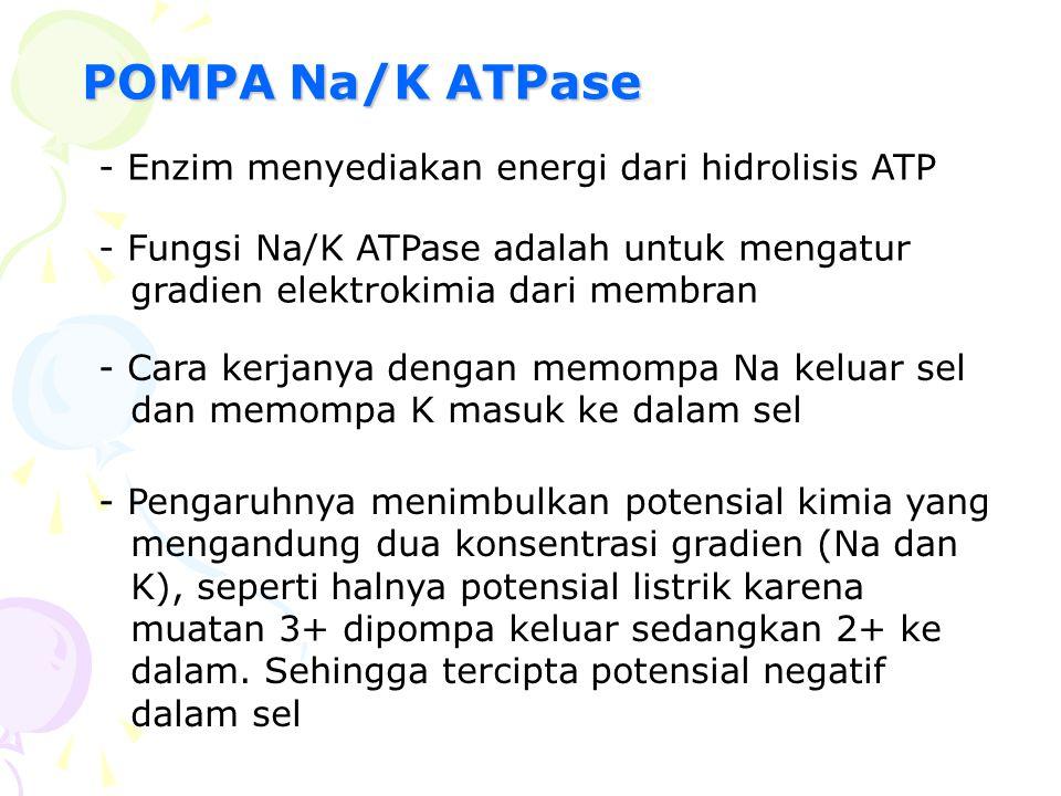 POMPA Na/K ATPase - Enzim menyediakan energi dari hidrolisis ATP - Fungsi Na/K ATPase adalah untuk mengatur gradien elektrokimia dari membran - Cara k