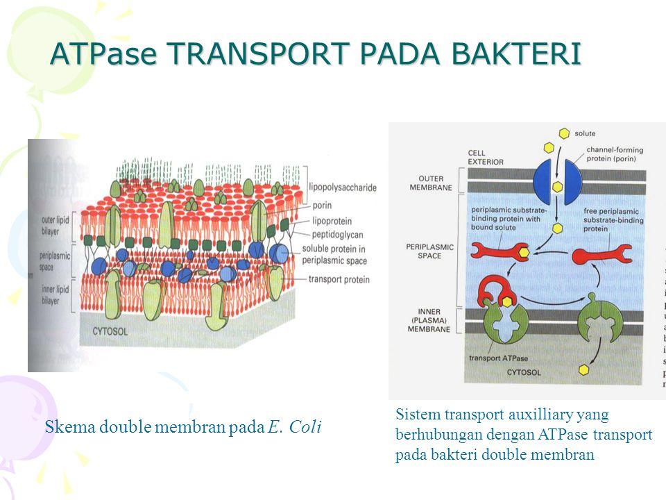 ATPase TRANSPORT PADA BAKTERI Skema double membran pada E. Coli Sistem transport auxilliary yang berhubungan dengan ATPase transport pada bakteri doub