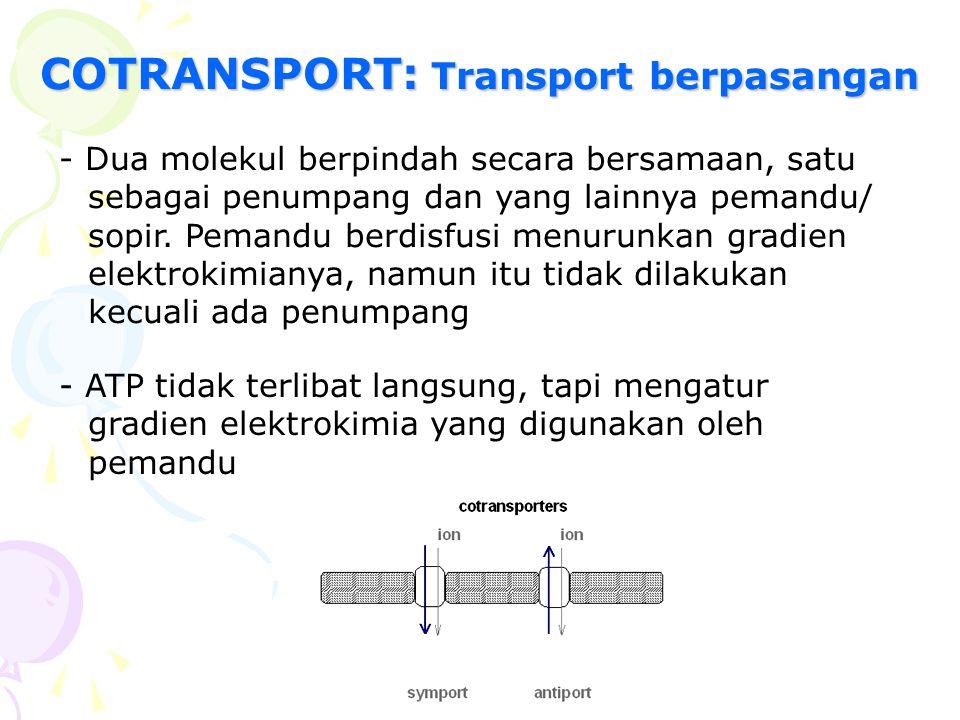 COTRANSPORT: Transport berpasangan - Dua molekul berpindah secara bersamaan, satu sebagai penumpang dan yang lainnya pemandu/ sopir. Pemandu berdisfus